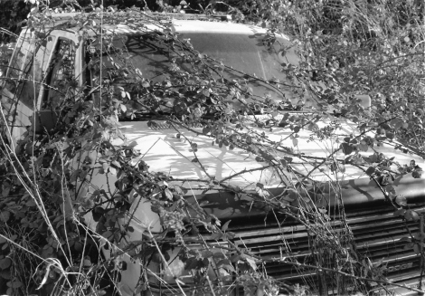 overgrown-car