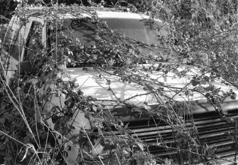overgrown-car